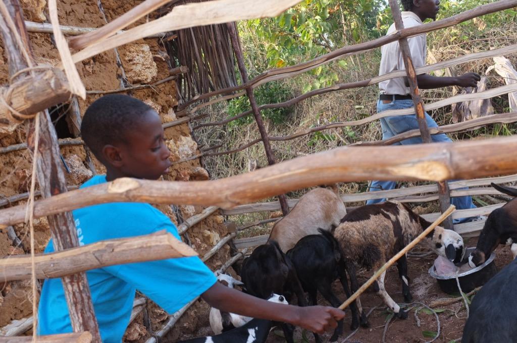 Potravinová bezpečnosť - program FARMA